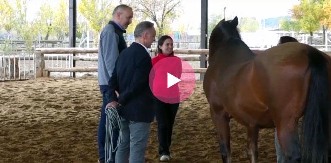 Descubriendo una sesión colectiva de Horse Coaching
