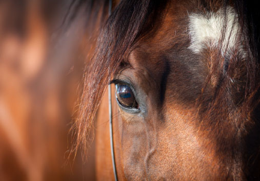 Horse Coaching - ¿Cómo trabajamos? | Lead Your Communication